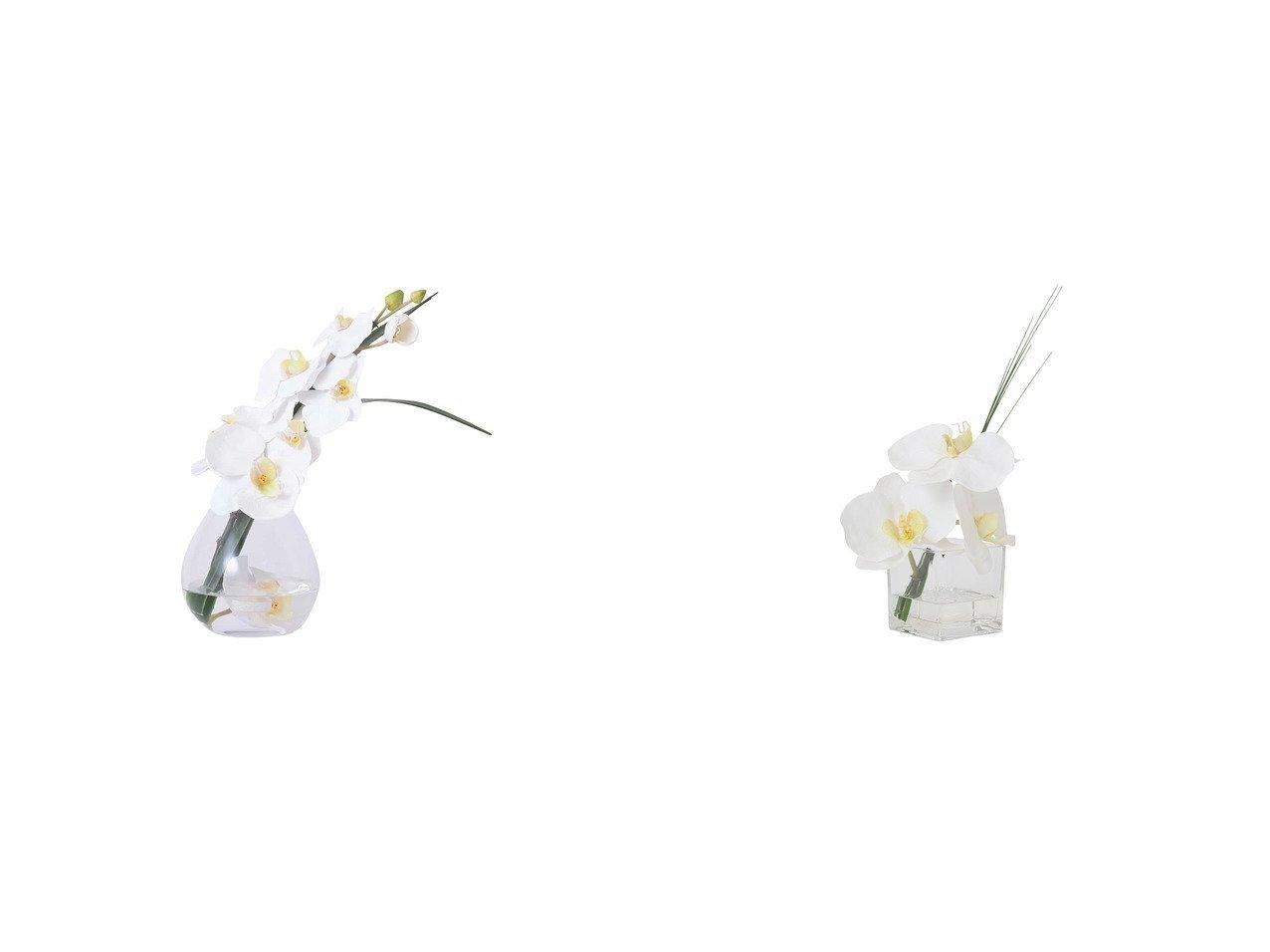 【EMILIO ROBBA/エミリオロバ】のファレノプシス #103125&ファレノプシス #103121 【FURNITURE 花瓶・フラワーベース】おすすめ!人気、インテリア雑貨・家具の通販 おすすめで人気の流行・トレンド、ファッションの通販商品 インテリア・家具・メンズファッション・キッズファッション・レディースファッション・服の通販 founy(ファニー) https://founy.com/ エレガント コレクション シリコン リーフ  ID:crp329100000052377