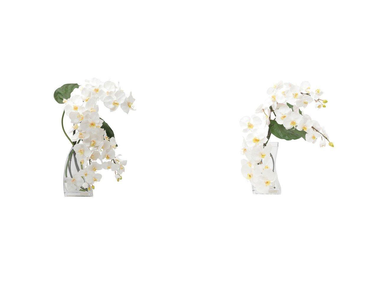【EMILIO ROBBA/エミリオロバ】のファレノプシス #101682&ファレノプシス #101683 【お家時間 花瓶・フラワーベース】おすすめ!人気、インテリア雑貨・家具の通販 おすすめで人気の流行・トレンド、ファッションの通販商品 インテリア・家具・メンズファッション・キッズファッション・レディースファッション・服の通販 founy(ファニー) https://founy.com/ 送料無料 Free Shipping エレガント コレクション シリコン リーフ  ID:crp329100000052381